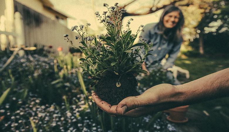 cheap beautiful garden